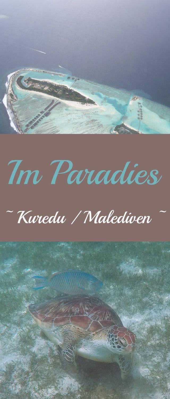 Urlaub auf den Malediven in der Regenzeit. Insel Kuredu -Lhaviyani atoll / Anreise mit dem Wasserflugzeug von Male. Wir sind im Paradies angekommen und haben gleich tolle Erfahrungen mit den Meerestieren erlebt. Es folgen noch viele weitere Videso.