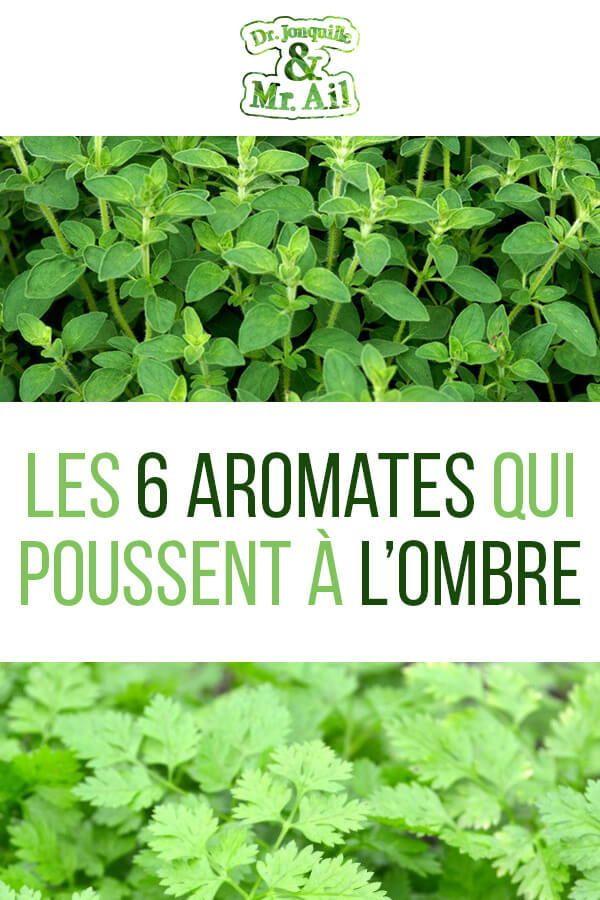 Voici les plantes aromatiques qui poussent à l'ombre! Vous ...