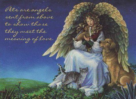 Macy was my angel.