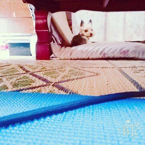 隠し撮り😁 何見てるのー?笑 #yokshateria #Yorkey #ヨーキー #ヨーキー部 #ヨーキーラブ #隠し撮り #かわいい  #いやし犬 #愛犬 #親ばか #犬カフェ