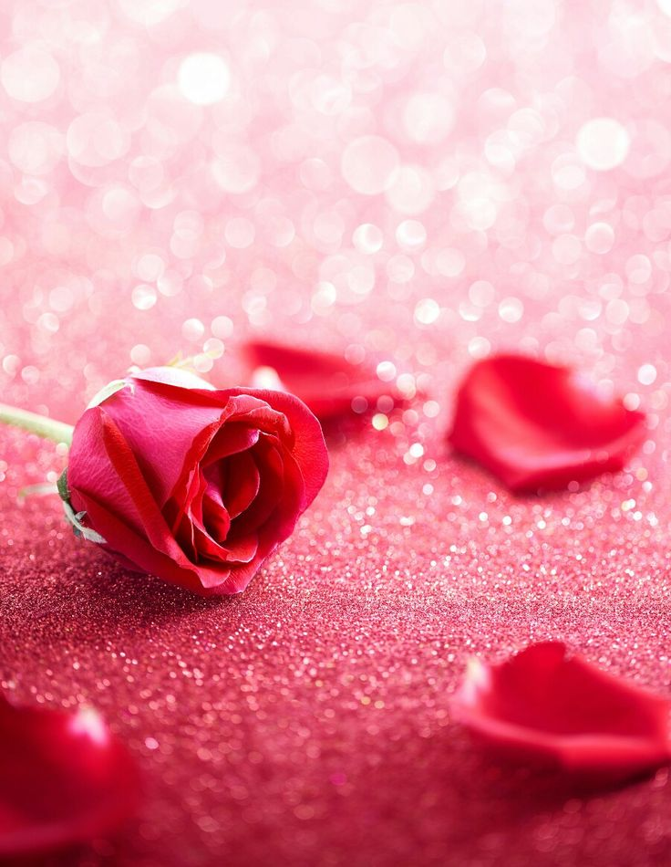 Beautiful rose with sparkle