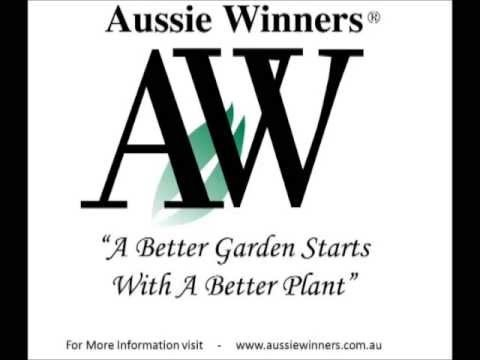 How to grow and maintain native plants in the garden by Aussie Winners