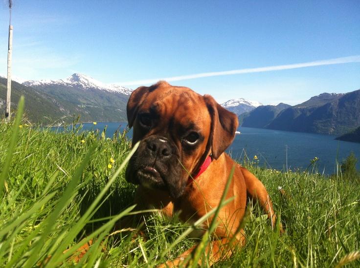 Love your dog - Love life.  Location: Stranda, Norway.   Model: ellythedog