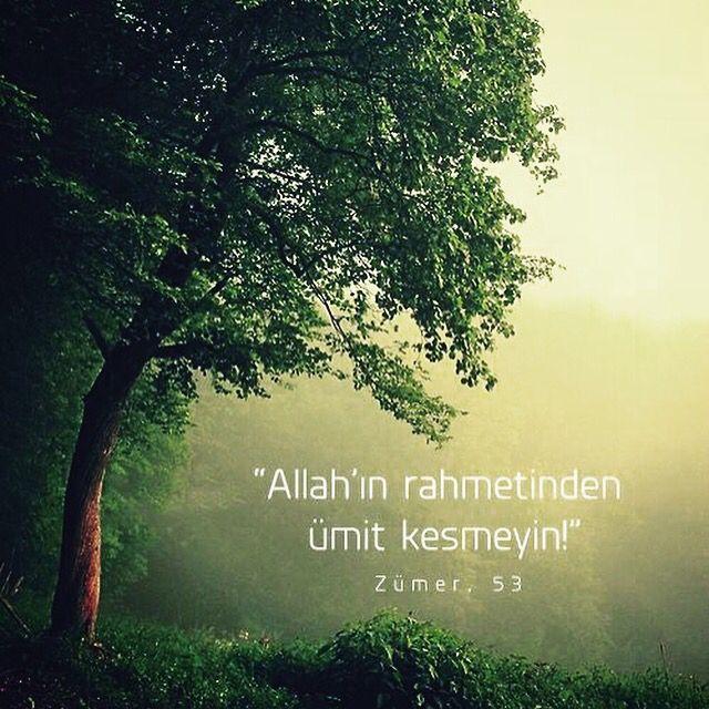 """Don't despair of the mercy of Allah ."" Quran ( surah zumar:53)"