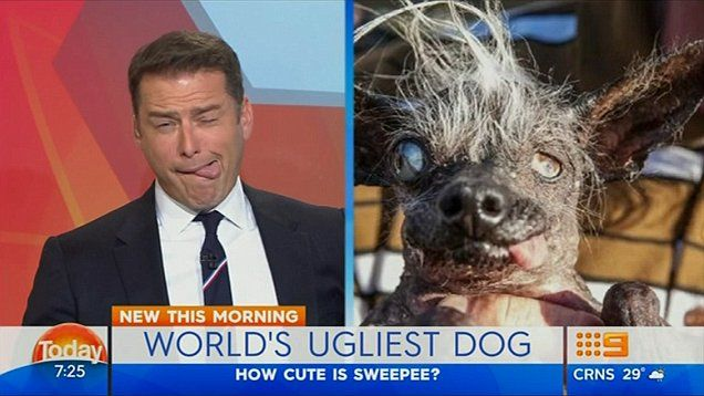 Sweepee Rambo, a disoriented-looking Chinese crested chihuahua, earned the dubious honor of being named World's Ugliest Dog in 2016.