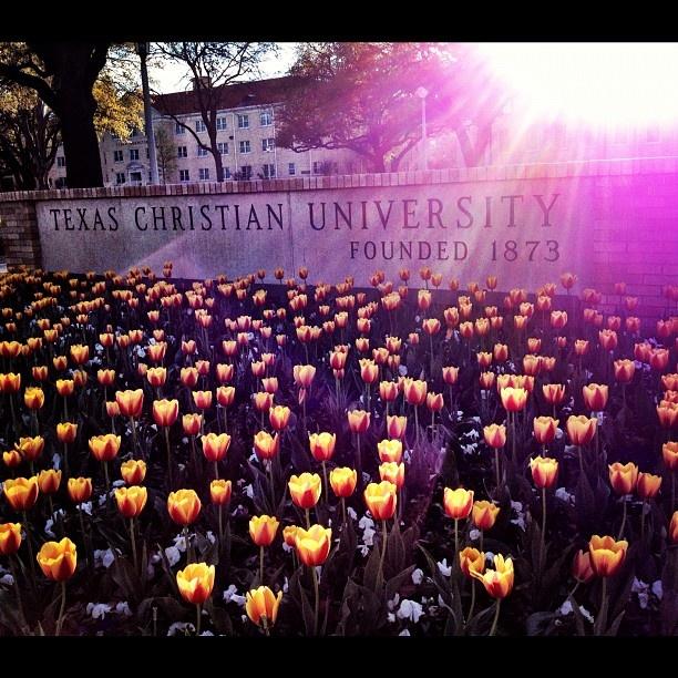 TCU in spring... tulip season! Favorite Season at TCU.Things