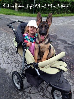 The German Shepherd Dog Community's photo: