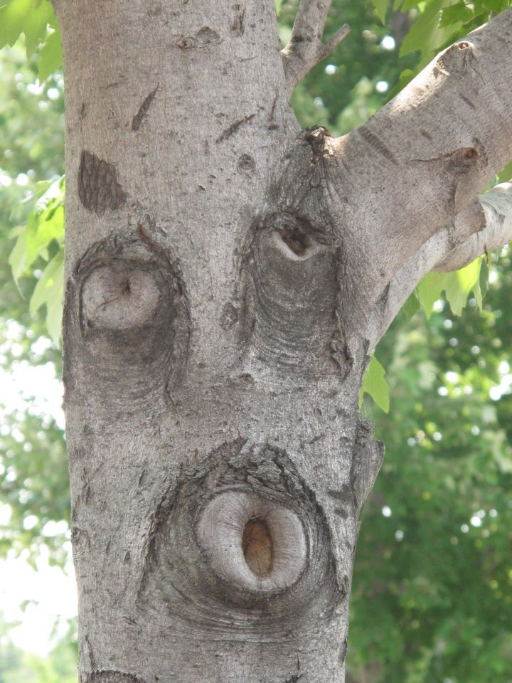 Pin by Con Tiki on Boards I love | Tree faces, Weird trees, Unique trees
