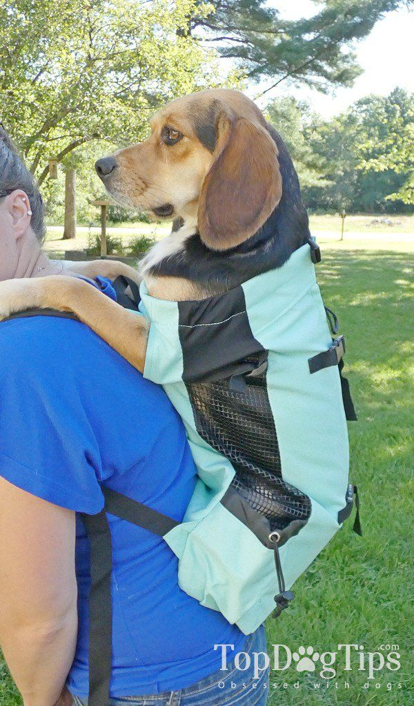 Review K9 Sport Sack Dog Backpacks Air Air Plus And Flex Dog