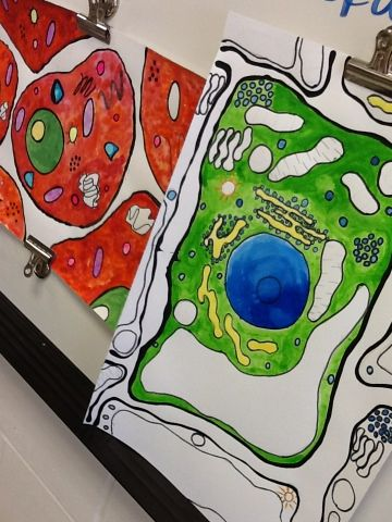 Art at Becker Middle School: Watercolor cell collaborative project