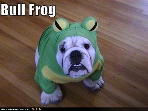 Bull Frog --- I don't think Diesel would ever forgive me if I did this to him lol