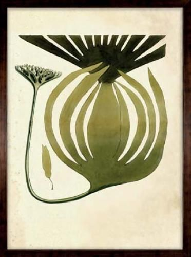 Harvey Seaweeds 10    Originally compiled by British naturalist, William Harvey, these seaweed images are taken from his work called Psychologica Britannica that was commissioned in 1884.    Art: 27in. × 35in.  Framed: 30.5in. × 38.5in
