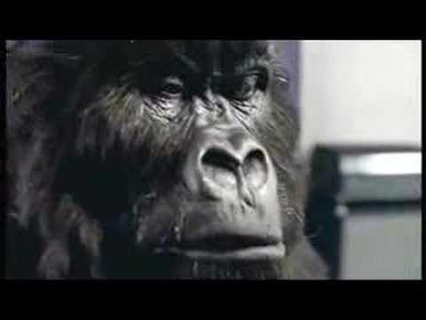 Cadbury's Gorilla Advert Aug 31st 2007 - YouTube