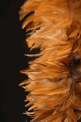 """Feather Boas 72"""" Natural Red Hackle 8"""" wide, via SAve-on-crafts, Price $50.00"""