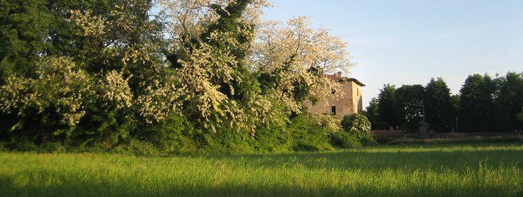 Rocca di Romanengo (Cr), terrapieno. Foto di Carlo Bruschieri.