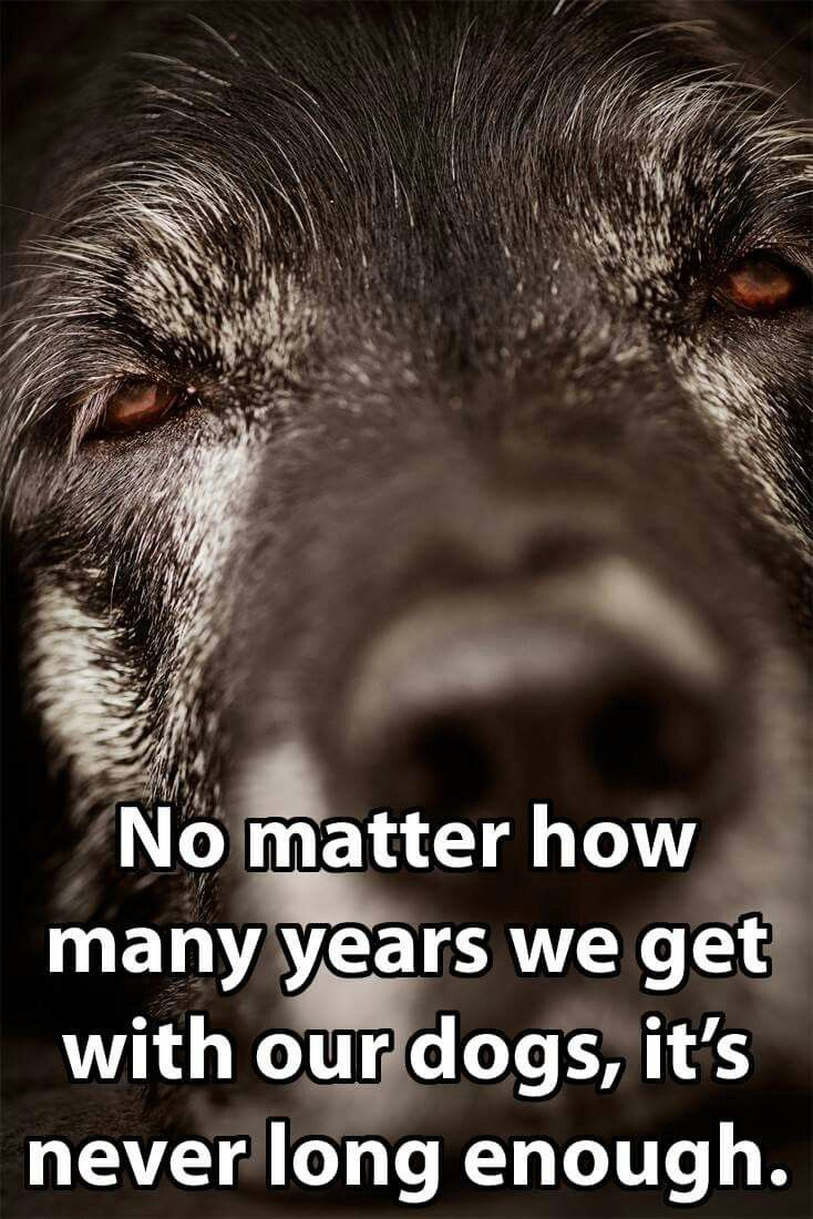 Loss Of A Pet Quote Best 25 Dog Loss Quotes Ideas On Pinterest  Dog Loss Pet Quotes