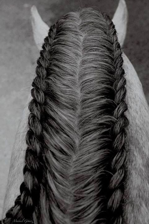 Doing this to my horse!