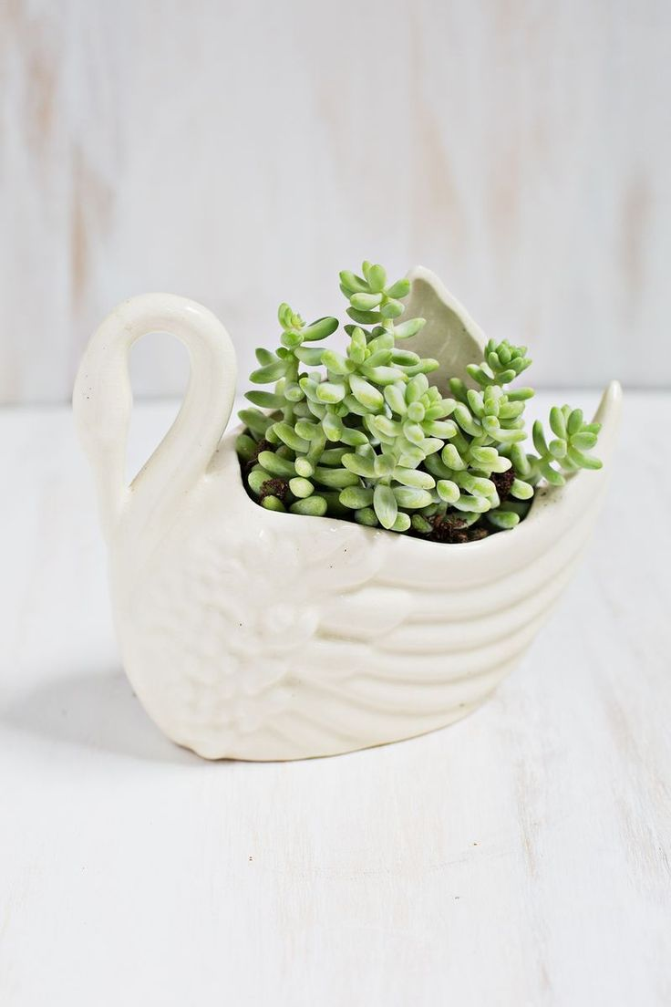 1000 ideas about low light houseplants on pinterest for Low light non toxic house plants