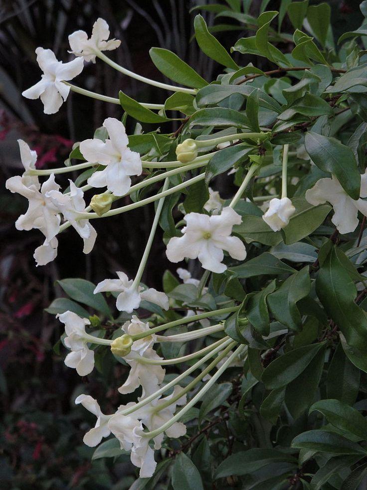 Garden Bush: 179 Best Images About Tropical Plants Full Sun On