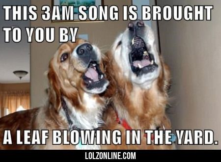 This 3am Song Is Brought To You...#funny #lol #lolzonline