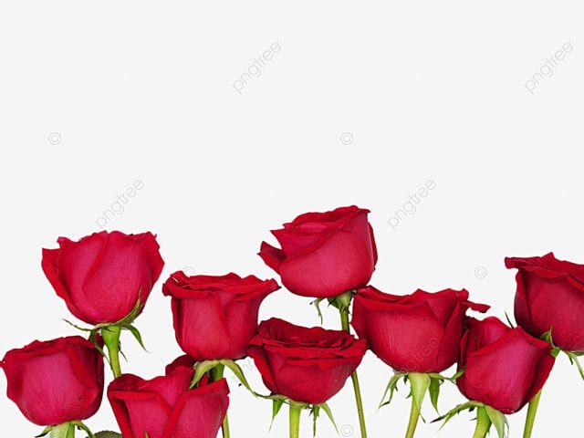 Ramo De Rosas Flores Dia De San Valentin Rosa Flor Rosa Png Imagen Para Descarga Gratuita Pngtree Ramo De Rosas Imagenes De Ramos Ramos De Flores