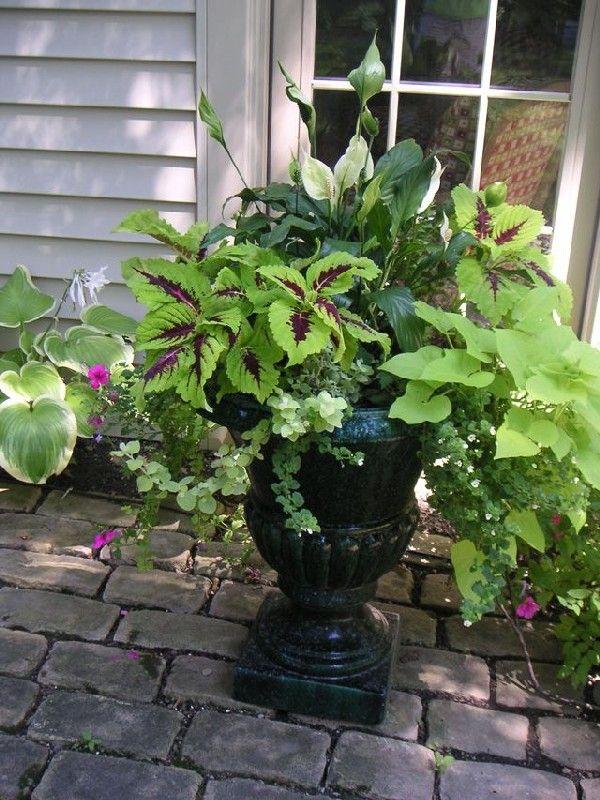 Astounding 50 Stunning Summer Planter Ideas To Beautify Your Home Https Bosidolot Com 2018 02 21 50 Stunning Summer Plant Summer Planter Shade Plants Plants