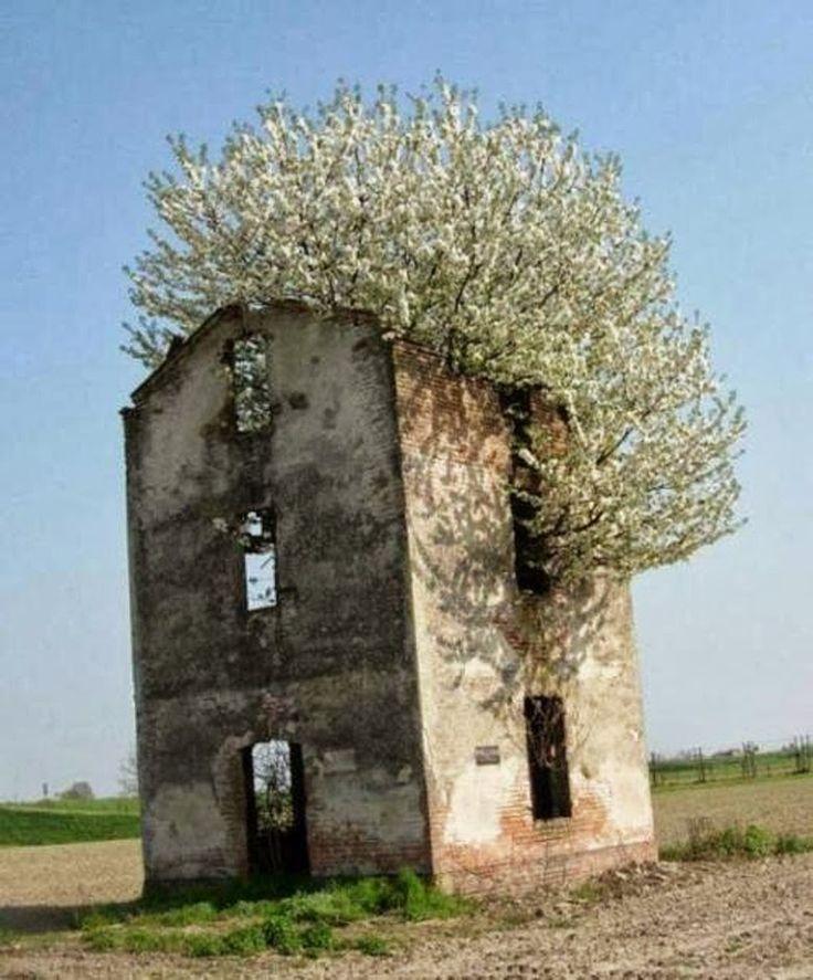 La Boheme: Bursting Out
