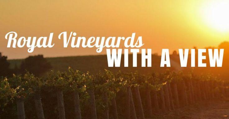 One of Croatia's best vineyards