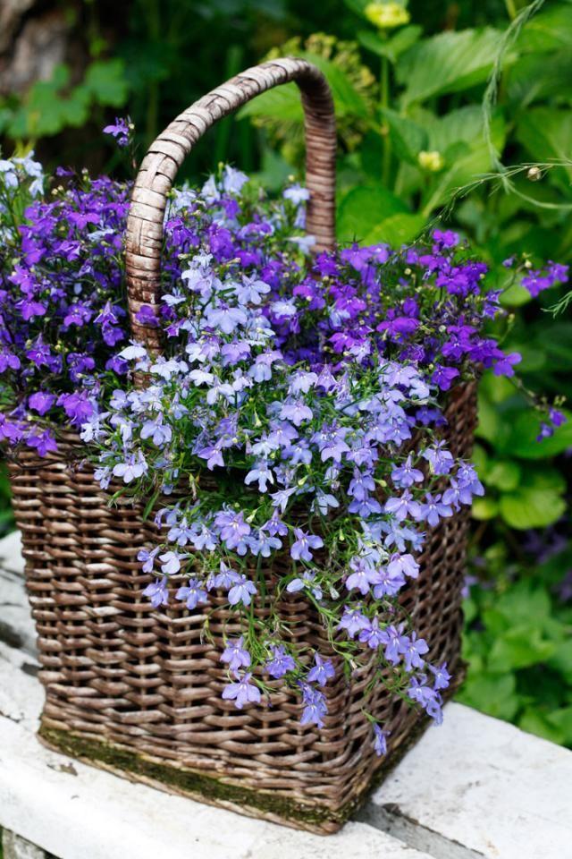 Kesän kauneimmat ruukkukukat | Viherpiha