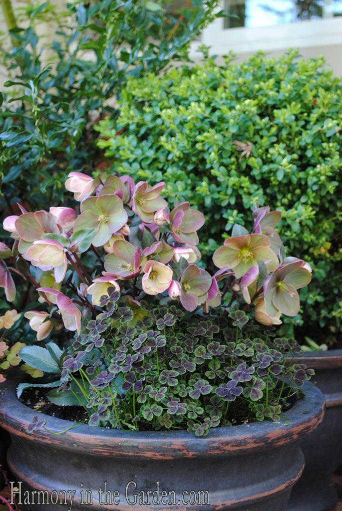 17 beste idee n over tuinieren in potten op pinterest groenten kweken container tuin en urban - Groenten in potten op balkons ...
