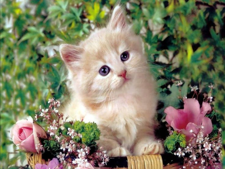 Cute Cat Pictures Hd Wallpapers 838 Full Hd Wallpaper Desktop Kittens Cutest Cute Cat Wallpaper Cute Cats