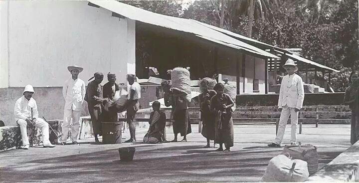 Para pemetik kopi, Klaten 1910
