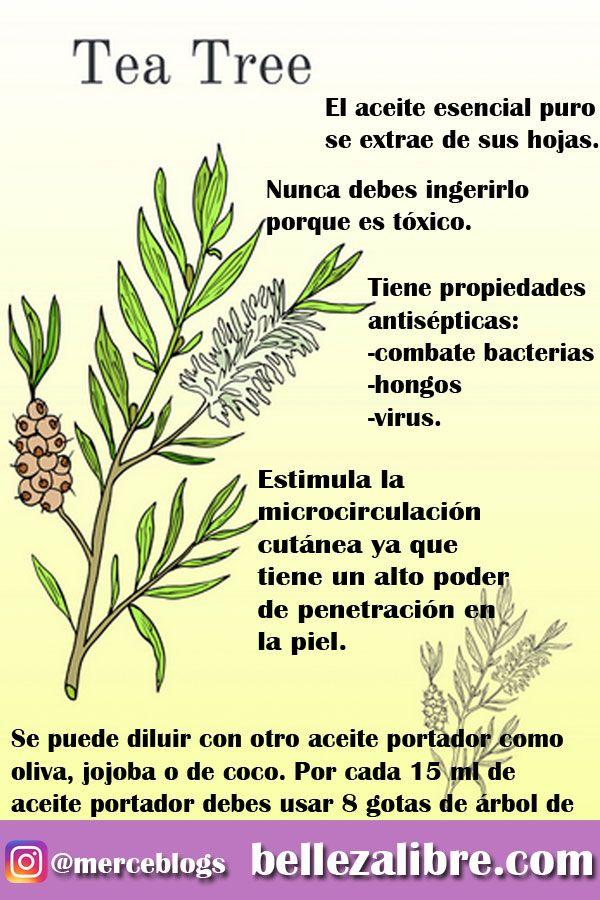 Remedio Natural árbol De Té Tea Tree Aceite Arbol De Te Aceite De árbol De Té Natural