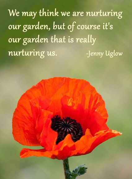 Love this quote   #gardeningquotes  http://www.floralacres.ca/