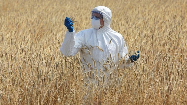 New GM crops once again fail the safety test – EurActiv.com