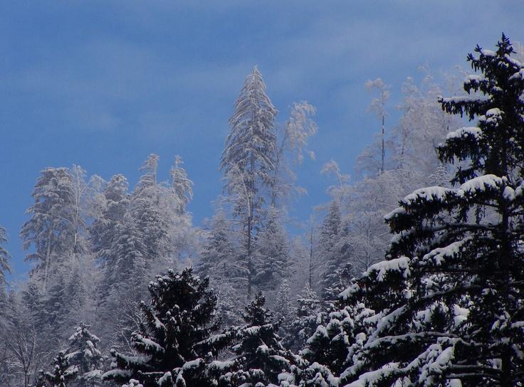 Crête du Mont de Baulmes, jan 2013
