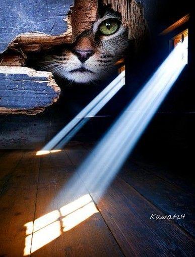 #Freetoedit#cat#