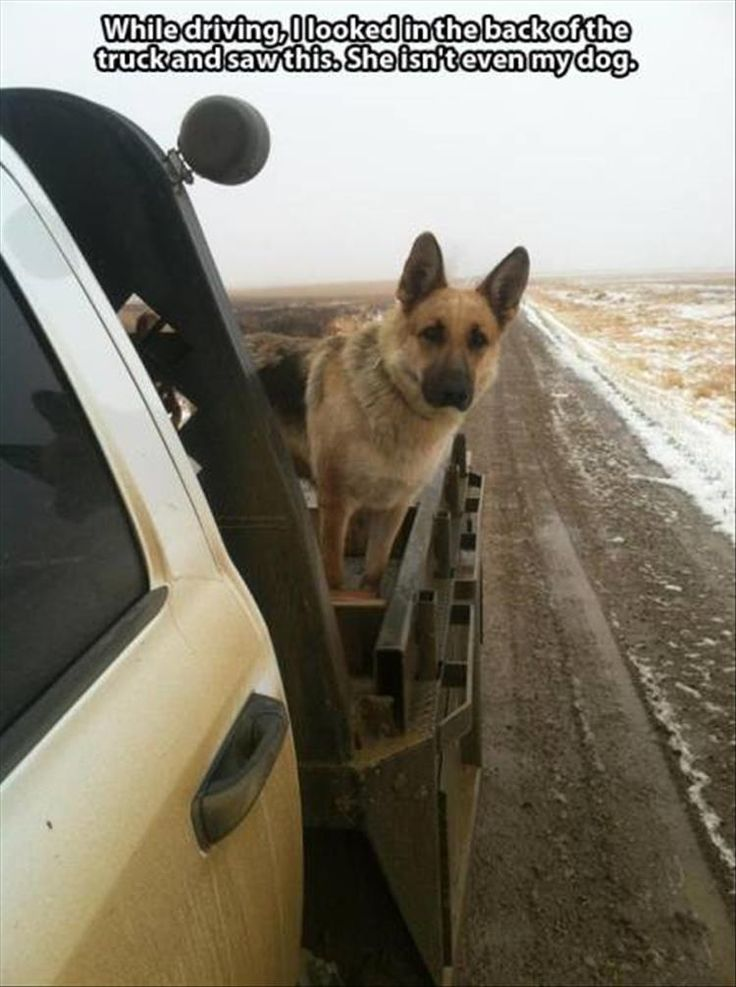 The Police (dog) have been following you for miles!
