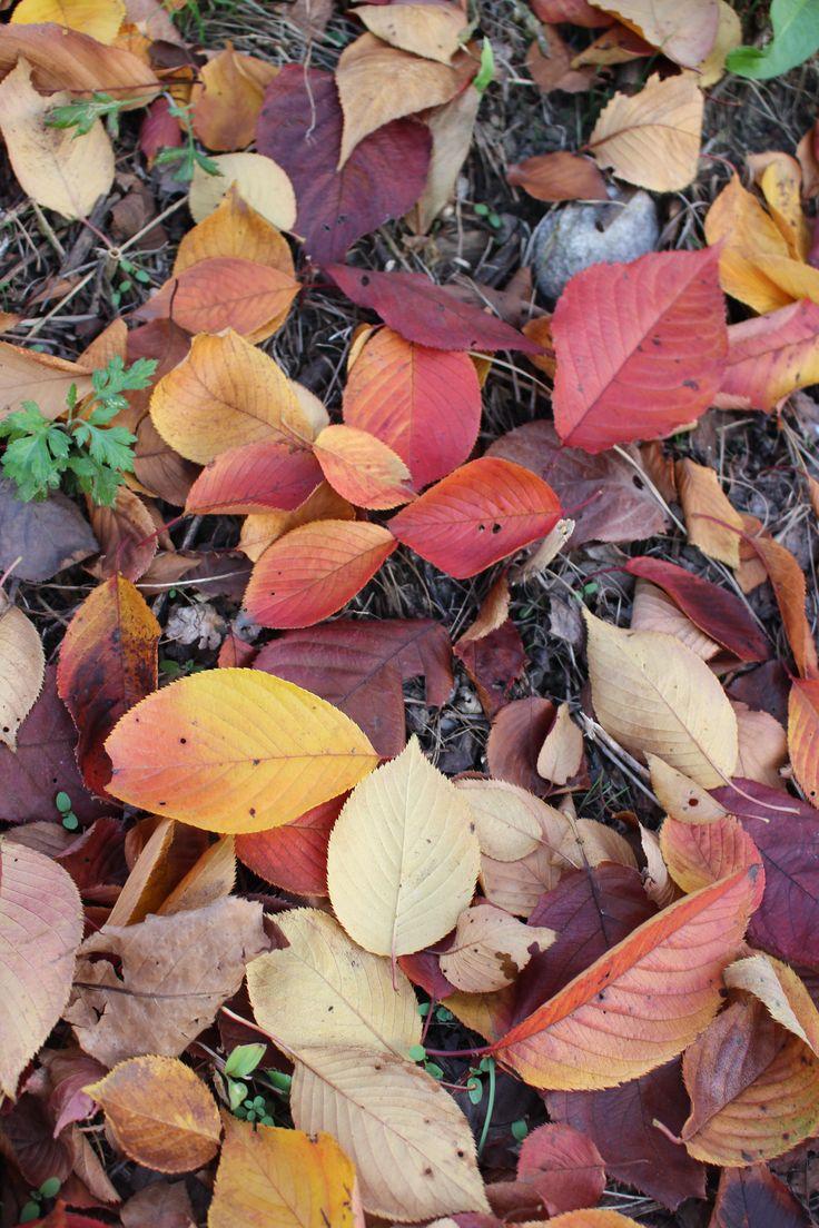 Autumn 2014 #5