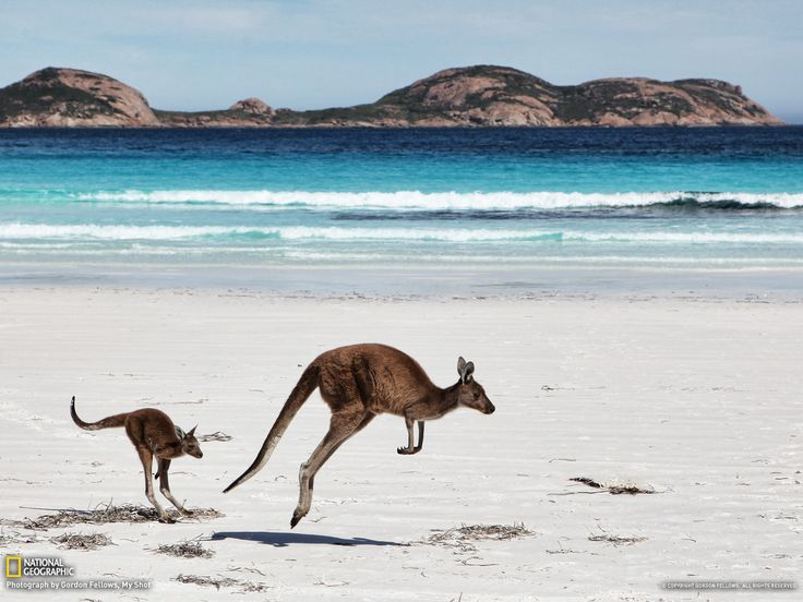 Kangaroo on the beach :)