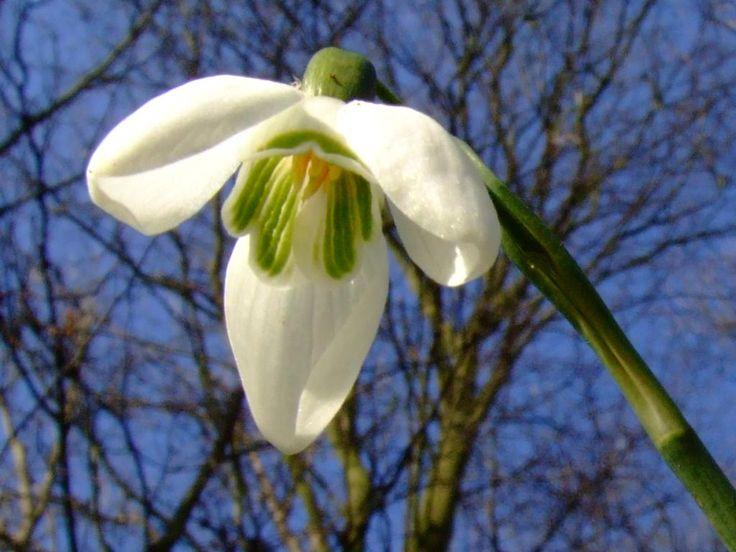 Vábení jara