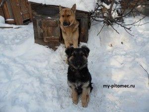содержание и уход за собакой зимой на улице
