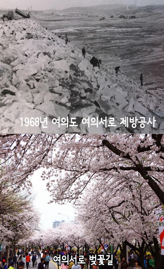 여의서로 벚꽃길
