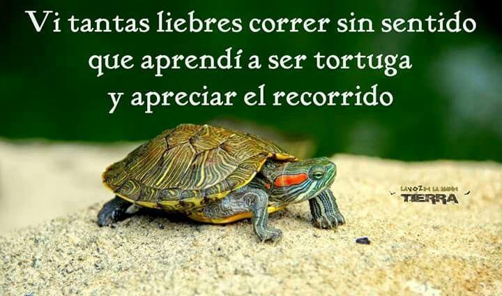 frases de la tortuga - Buscar con Google
