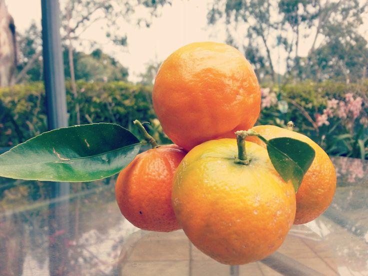 Homegrown mandarins :D   #sour #fruit