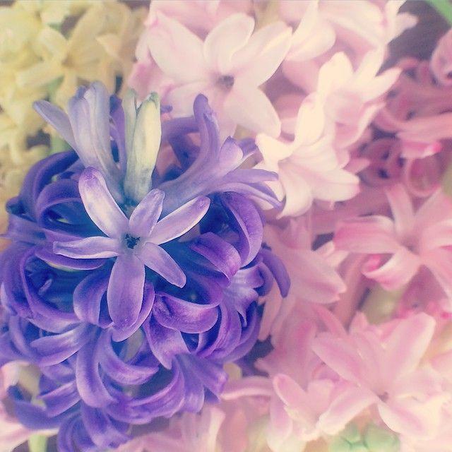 Сладких снов ✨✨  ! (цветы живые) #гиацинт #цветы #флористика #букет #розовый #сиреневый