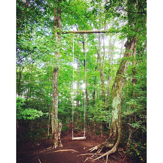 【emu_lien】さんのInstagramをピンしています。 《#軽井沢キャンプ場 #SweetGrass  このハイジのブランコがやりたかったー♡♡♡ ハイジのようにめちゃんここいだったー!!笑  #キャンプ #北軽井沢 #大自然 に#感謝 #ハイジ #ブランコ #森 #森で遊ぶ #アスレチック #木 #楽しい》