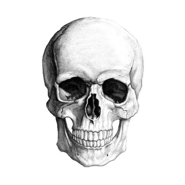 Kernie Cam Productions: Skull Drawing found on Polyvore