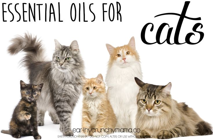 Young Living Essentials Oils: Cats