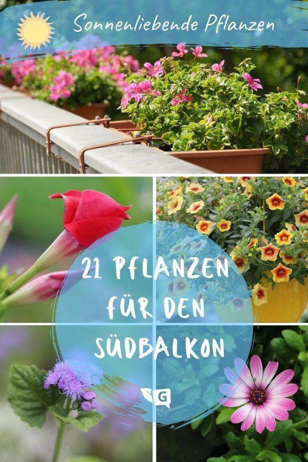 Pflanzen Fur Die Pralle Sonne Diese Vertragen Den Heissen Sudbalkon Gartendialog De Pflanzen Pflanzen Fur Pralle Sonne Balkon Pflanzen